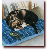 "Colored Pencil Art entitled ""Best of Friends"": A dog and fish sleeping on a mat"