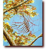 "Colored Pencil Art entitled ""Red Light Reunion"": A rib cage spider crawling on a web of gore"