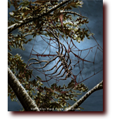 "Fantasy Art entitled ""Red Night Reunion"": A rib cage spider crawling on a web of gore at twilight"